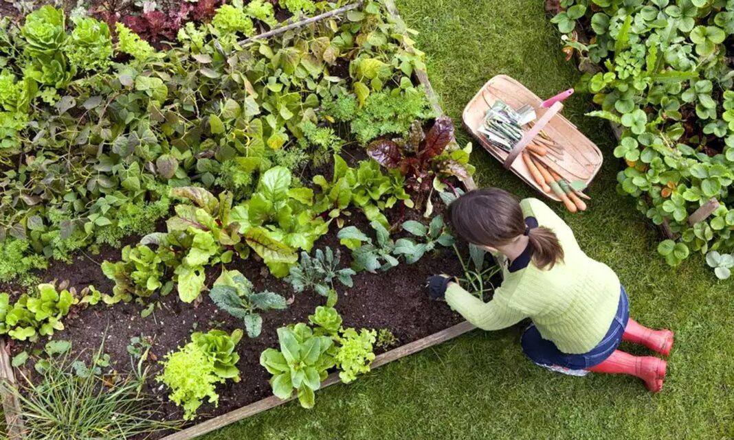 Create an Eco-Friendly Garden