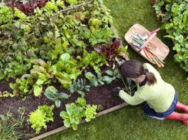 Create an Eco-Friendly Garden